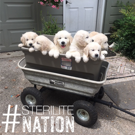#sterilitenation